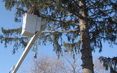 Tree Trimming Colchester CT