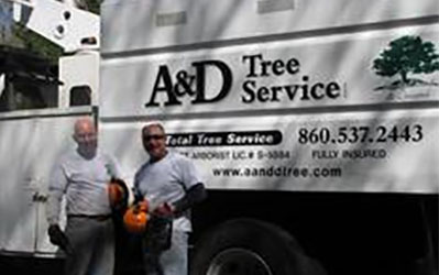 Tree Pruning | Arborist | Colchester CT