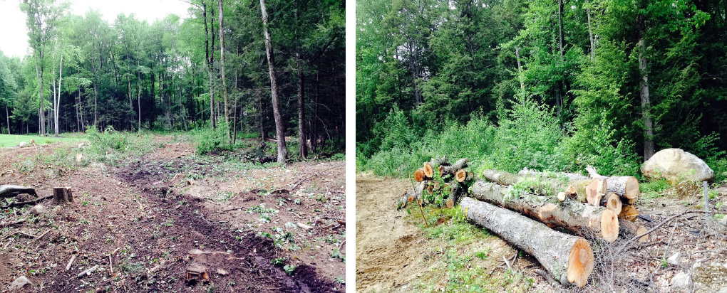 Lot Clearing | Tree Removal | CT
