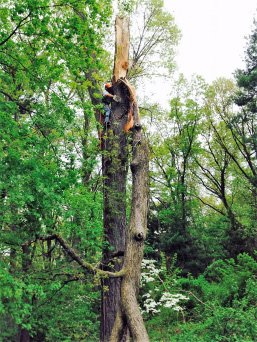 Tree Removal CT