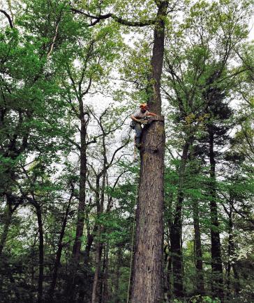 Arborist CT