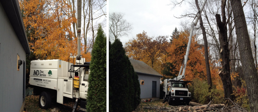 Tree Trimming Griswold CT