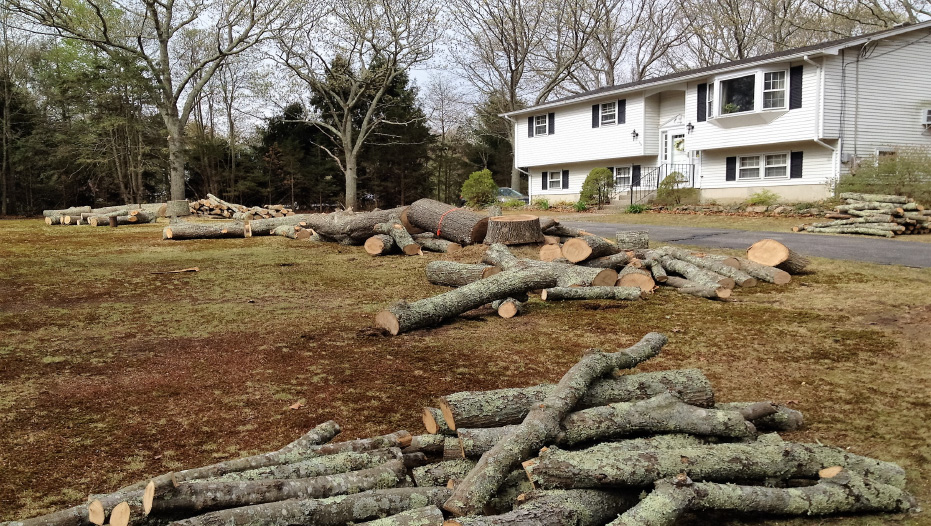 Tree Clearing CT