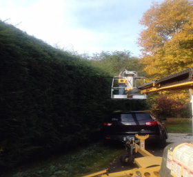 Hedge Trimming CT