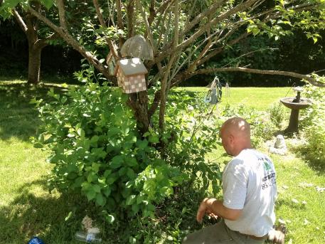 Bush Pruning CT