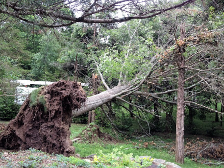 Tree Removal Griswold CT